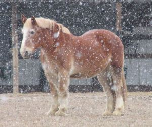 Cindy Daigre shared Ferrell Hollow Farm-Senior Horse Sanctuary's Henry