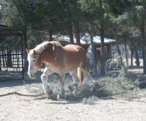 Henry at Ferrell Hollow Horse Sanctuary 'scratching his itch'