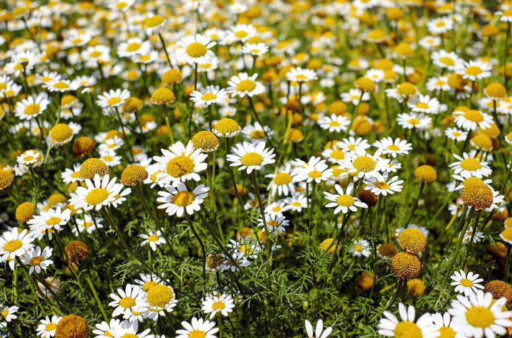 shallow-focus-photography-of-yellow-and-white-flowers-during-159110